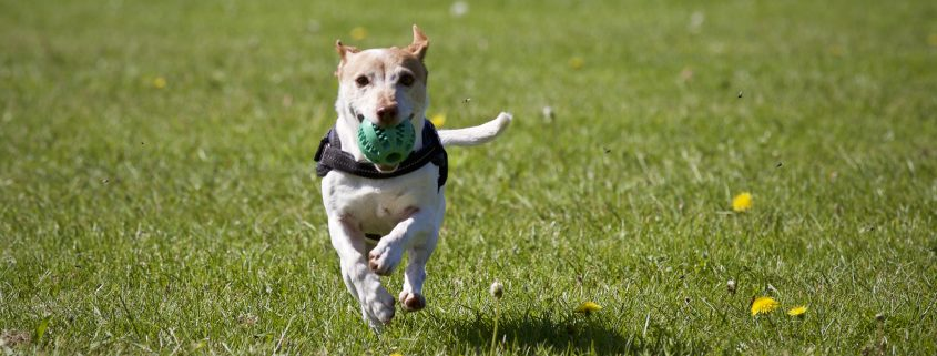 PAWS is advocating for a permanent dog park in Jackson Hole